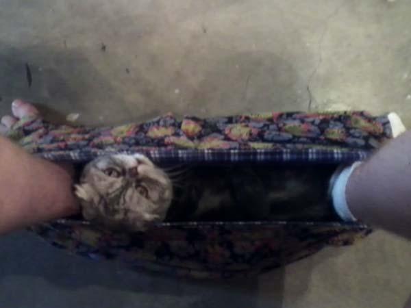 Pets in loo05