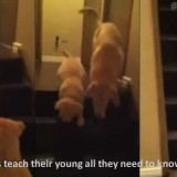 Dogs and Cats Teach Their Young Ones all they need to know about trust