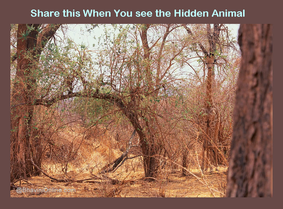 picture riddle find the hidden animal bhavinionline