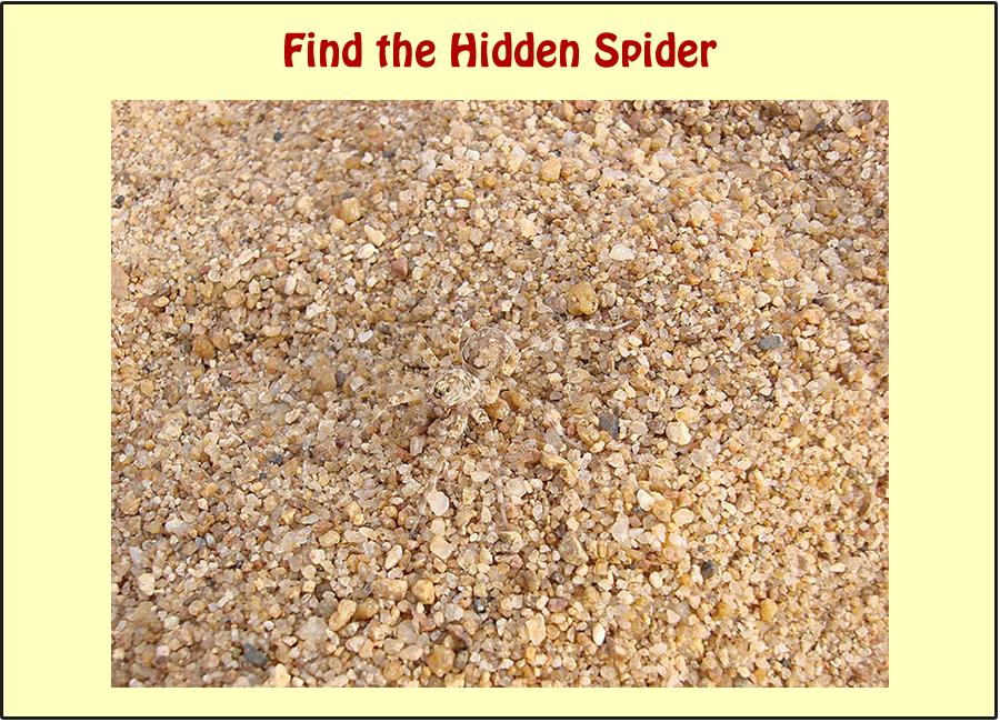 WhatsApp Picture Riddle: Find the Hidden Spider